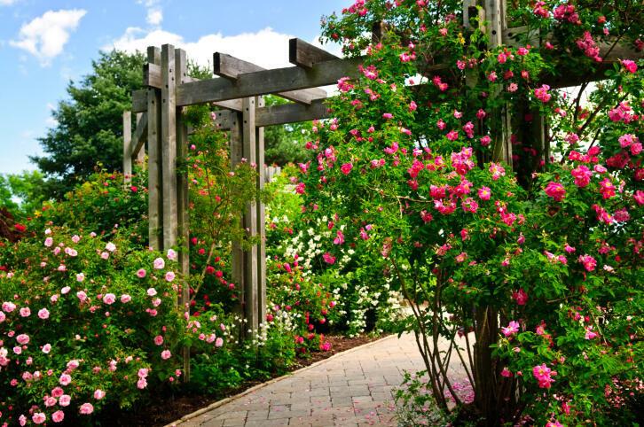 Cómo encontrar las plantas trepadoras para tu jardín